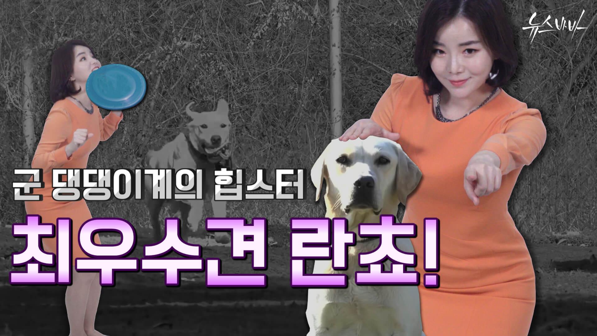 [뉴스바바] 군 댕댕이계의 힙스